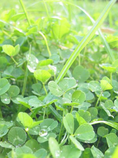 green100.....tennokeppen.jpg