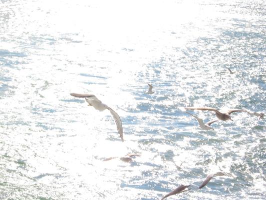 mizu025-白い波にのまれつつ-tennokeppen.jpg