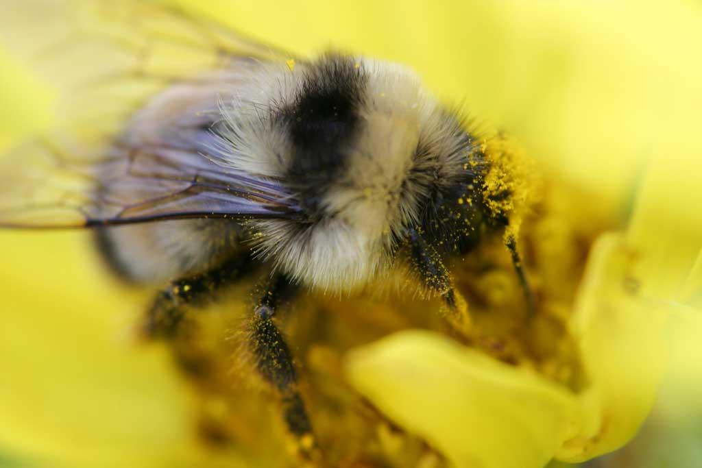 yun_1493-ハチと花粉-.jpg
